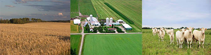 5 Ways to Positively Impact the Economic Viability of Agriculture in Northern Ontario