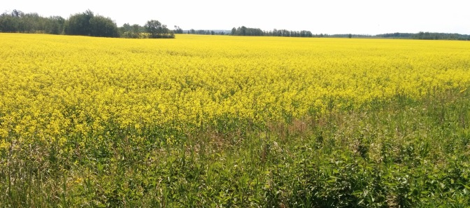 Diversifying the Cash Crop Industry in Northern Ontario