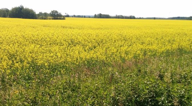 Diversifying the Cash Crop Industry in Northern Ontario