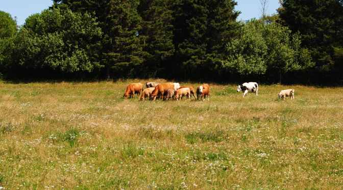 Growing Agriculture with Northern Ontario Community Pastures
