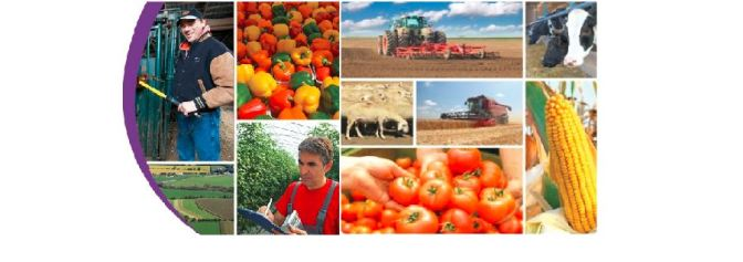 Free Agri-food Courses to Grow Your Business