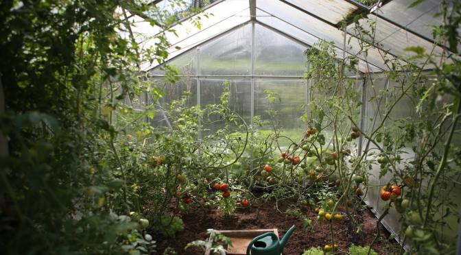Everything You Need to Know About Leasing Greenhouses